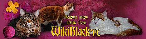 WikiBlack*PL - hodowla kotów Maine Coon